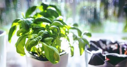 cup-leaf-spring-leaves Resized